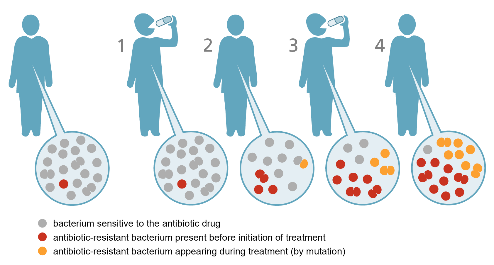 Evolution of antibiotic resistancy